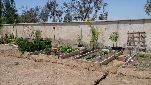 May...5 types of tomatoes,  4 different peppers,  cucumbers, beans, carrots, rosemary, basil and cilantro