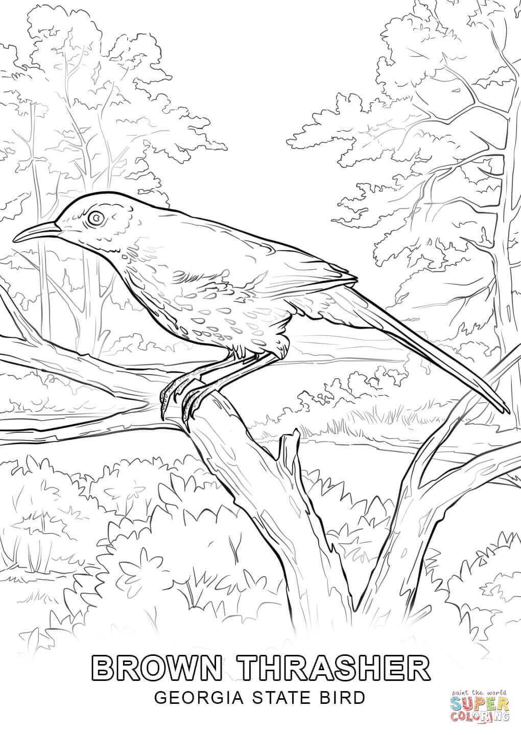 Click The Georgia State Bird Coloring Pages To View Printable Version Or Color It Online Compati Bird Coloring Pages Flag Coloring Pages Flower Coloring Pages