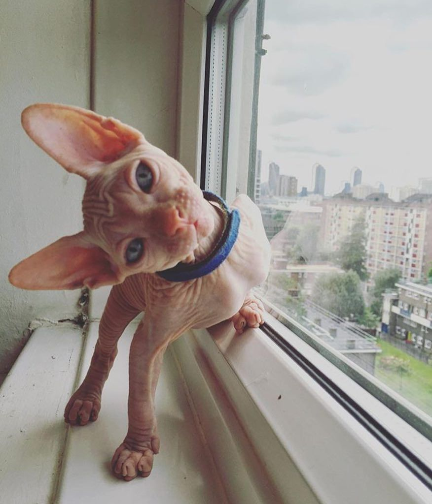 You look funny thanks to funny devonrex di 2020