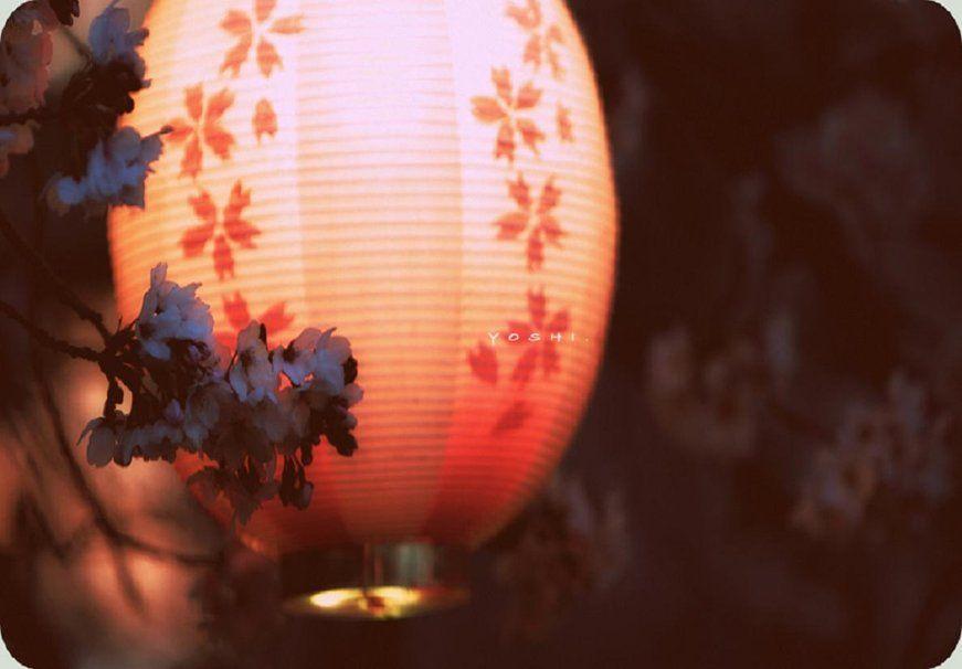 Japanese Lanterns Japanese Lantern Wallpaper Christmas