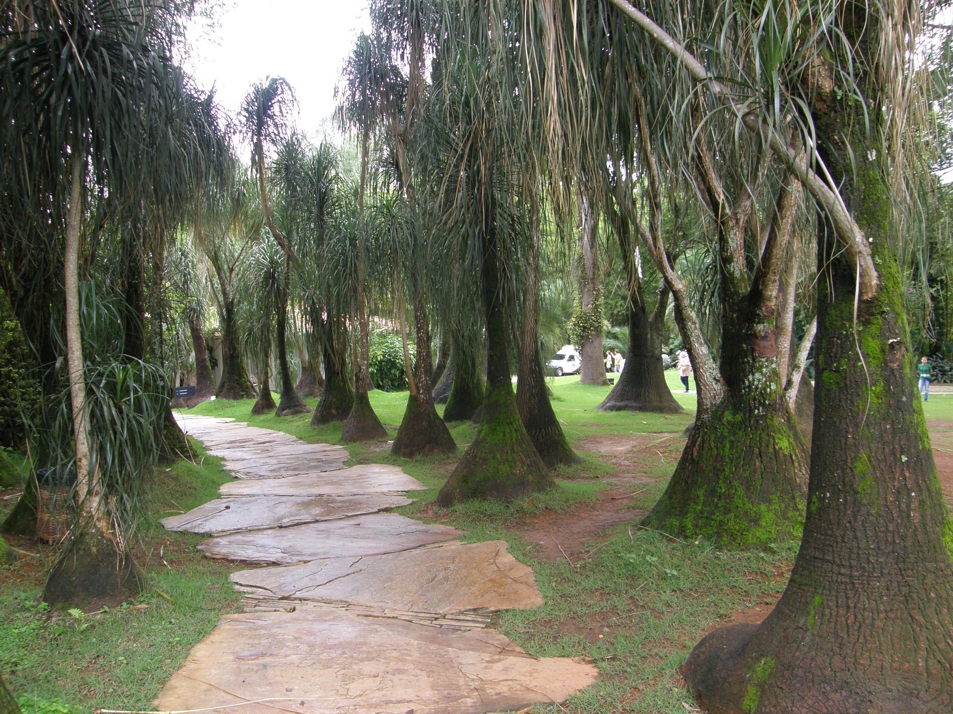 Plantas ornamentais jardines con plantas suculentas y for Plantas jardin mediterraneo