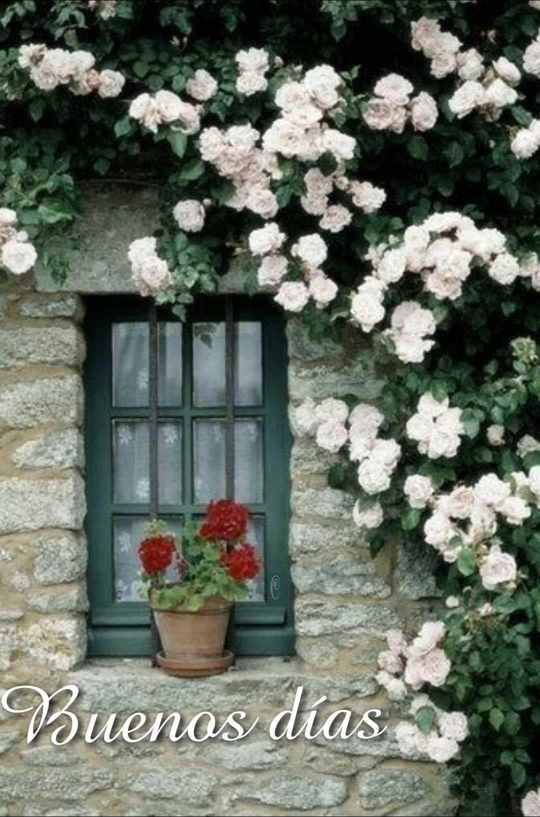 Pin De Diseños Xcaanda En Saludos Climbing Roses Windows