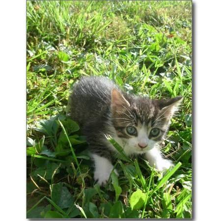 Google Grey Kitten Cute Ipad Cases Kitten Puzzles