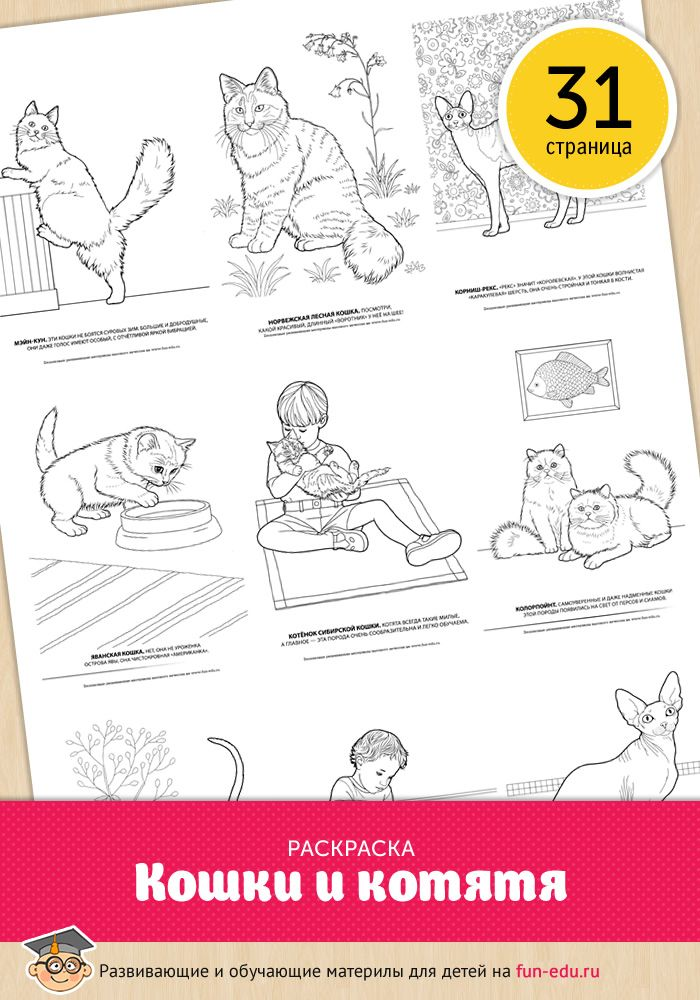 Распечатать раскраски для девочек кошки и котята бесплатно ...