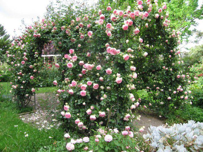 rosenbogen mit kletterrosen ein genuss f rs auge und die. Black Bedroom Furniture Sets. Home Design Ideas