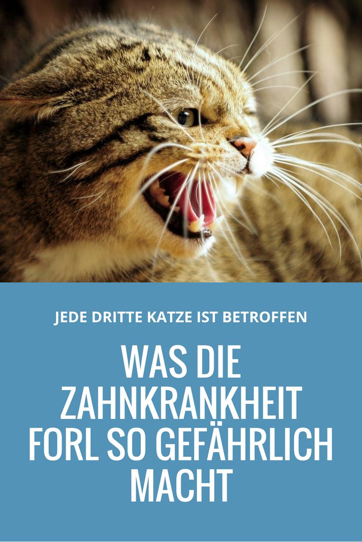 Zahnkrankeit FORL Was die neue Geißel der Katze so