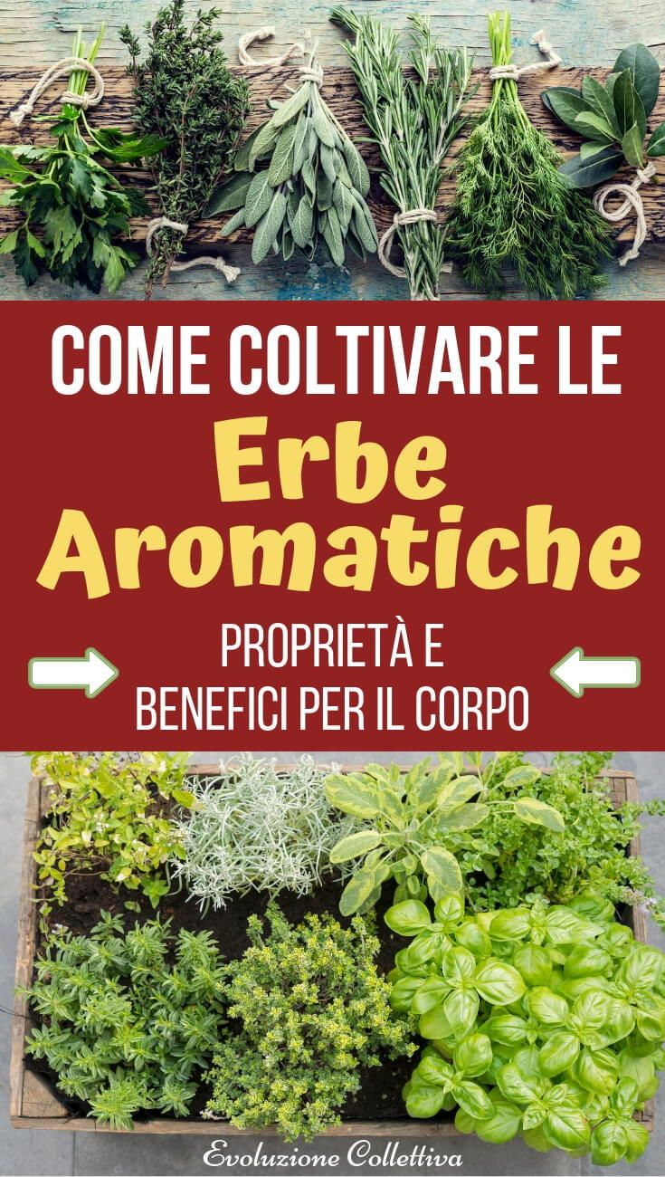 Coltivare In Casa Piante Aromatiche come coltivare le erbe aromatiche? consigli, trucchi e