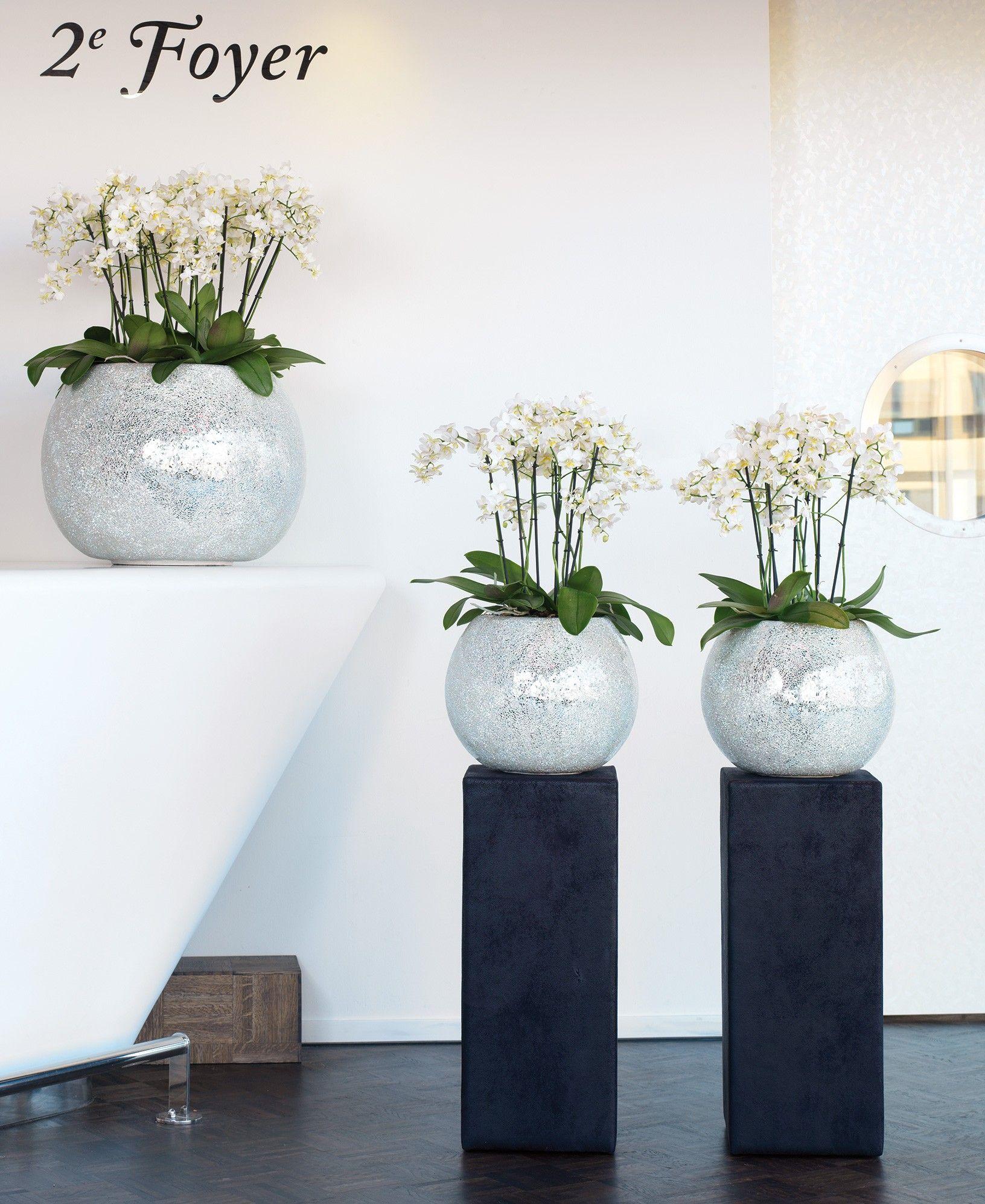Hedendaags Orchidee op zuil | Mi beso blanco Orquídeas blancas - Huis WP-78
