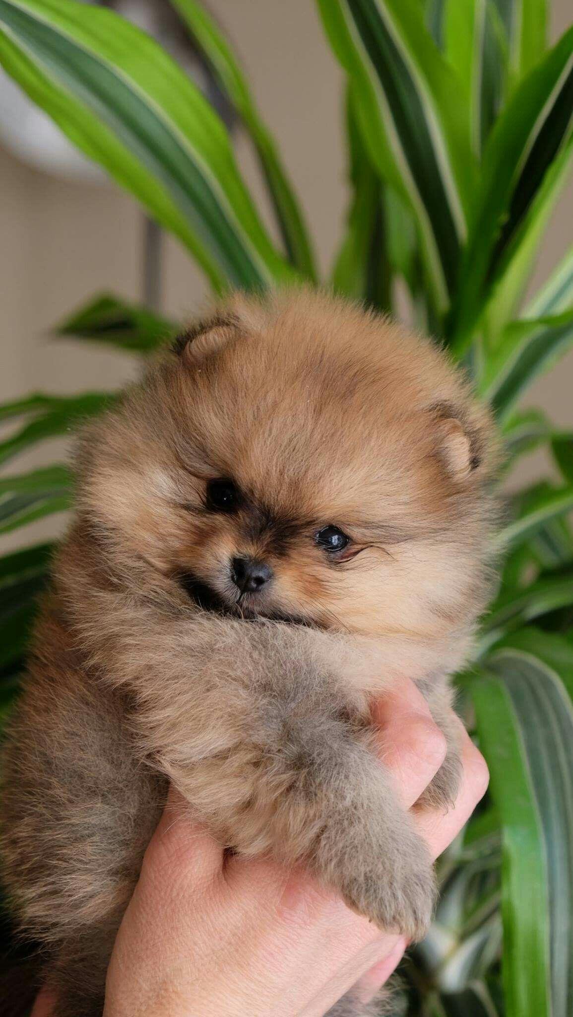 Baby animals instagram - Pinterest Jenmacho2 Instagram Jen_macho Snapchat Jen51 Cutest Animalsbaby