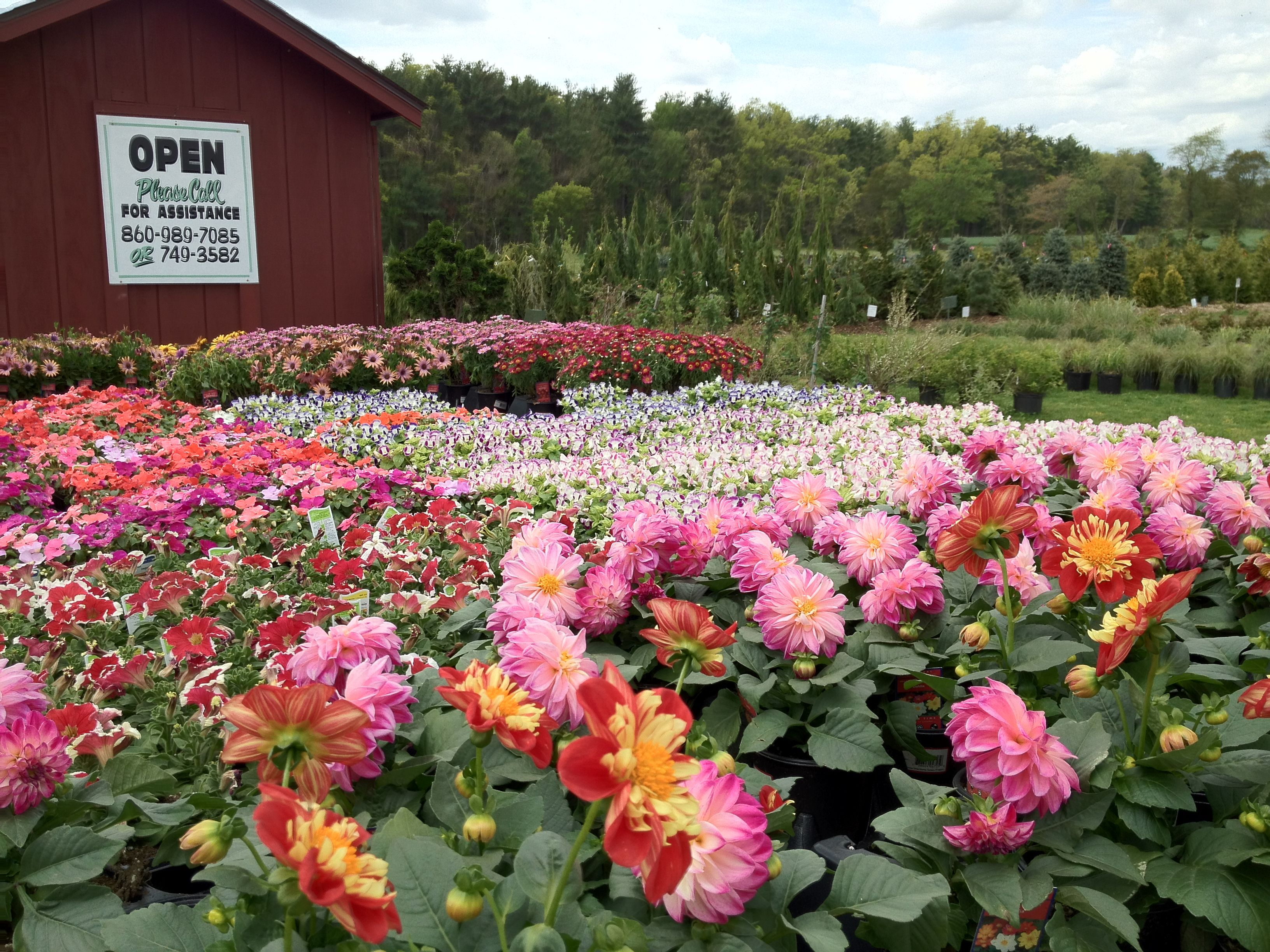 Wide selection of perennials. Low maintenance and come ...