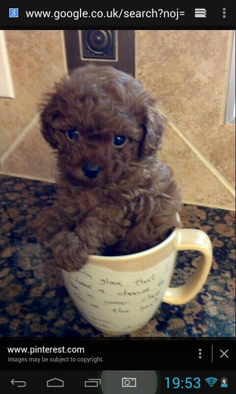 Dog in a cup!!!