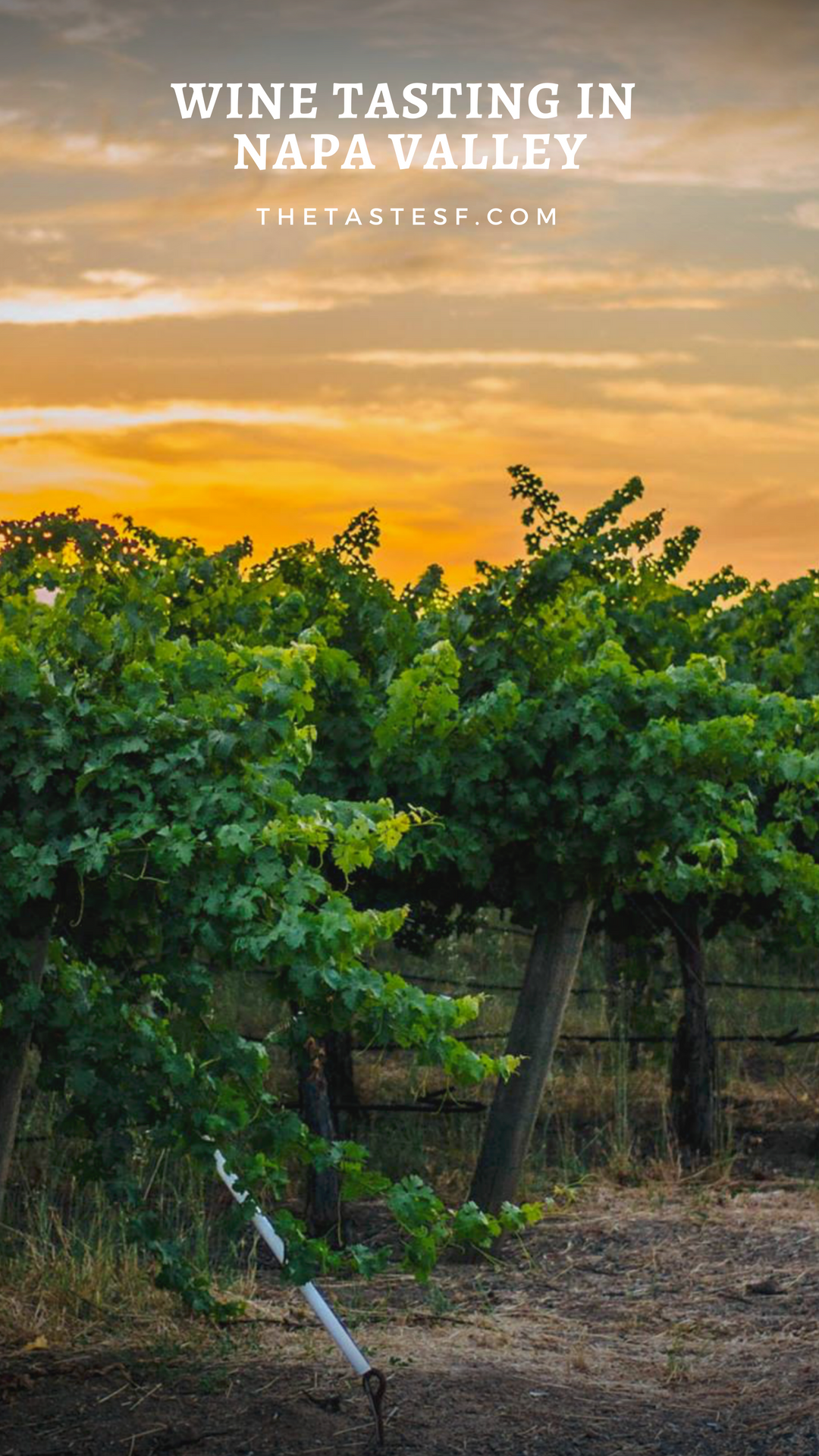 Napa Valley Wine Tasting Guide | Travel Inspiration | The