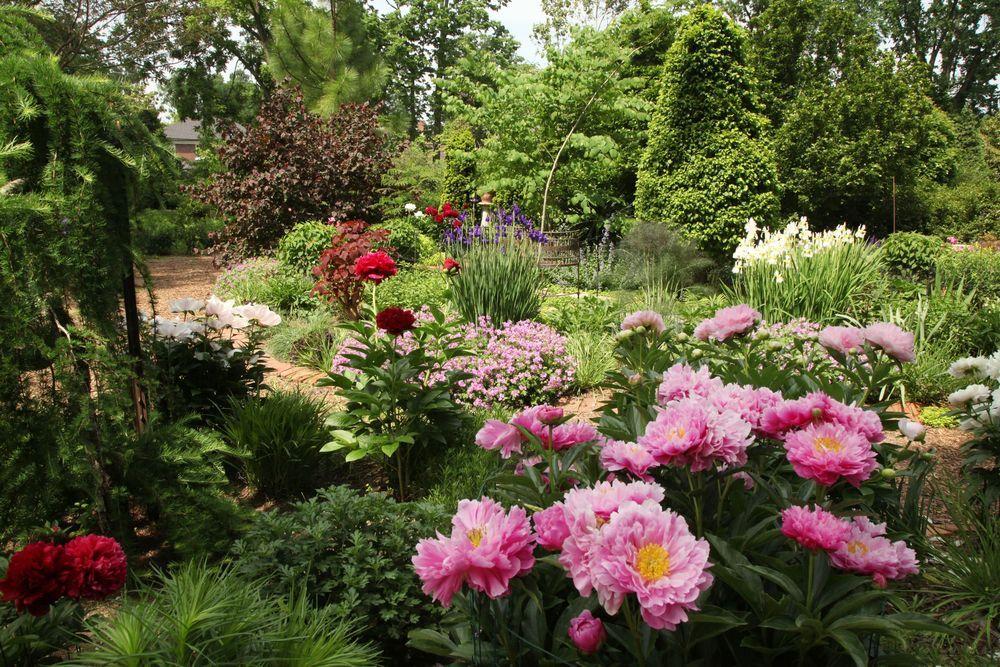 linwood gardens tree peony festival images | Specimen Garden ...