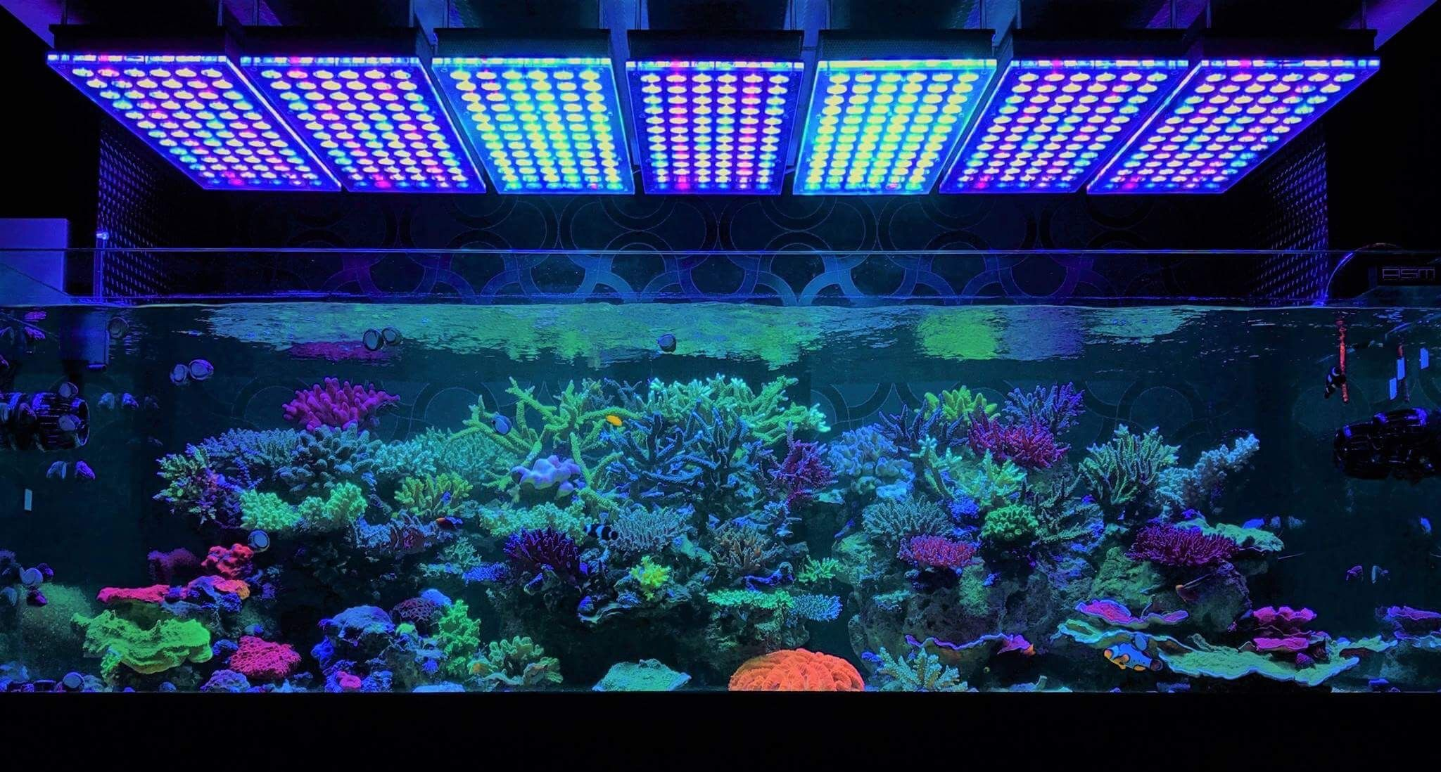 When Should You Start Adding Corals To A Reef Tank How Do You Decide When The Tank Is Ready Click The Link To Of Saltwater Fish Tanks Reef Tank Reef Aquarium