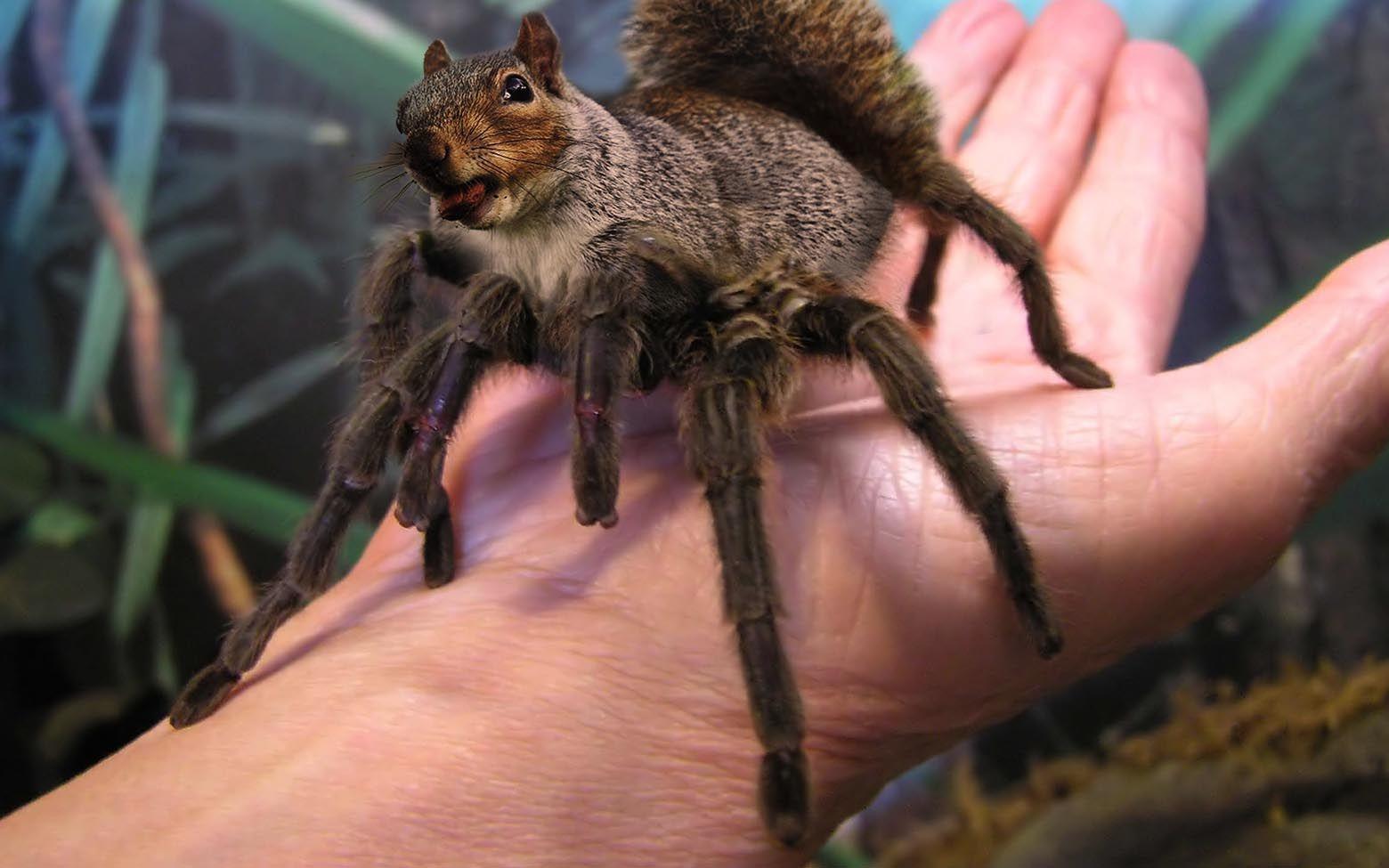 squirrantula