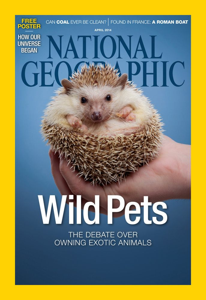 Pin On Hedgehogs Are The New Owls