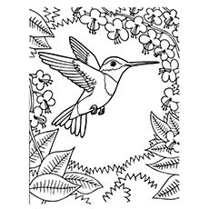 hummingbird coloring pages ruby throated hummingbird - Hummingbird Coloring Page