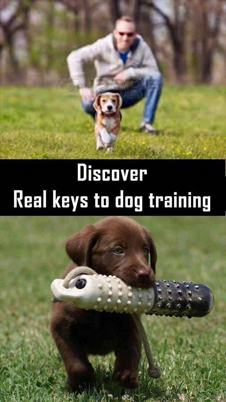 Best Dog Training Tricks Your Pet Ought To Be As Clean Precisely