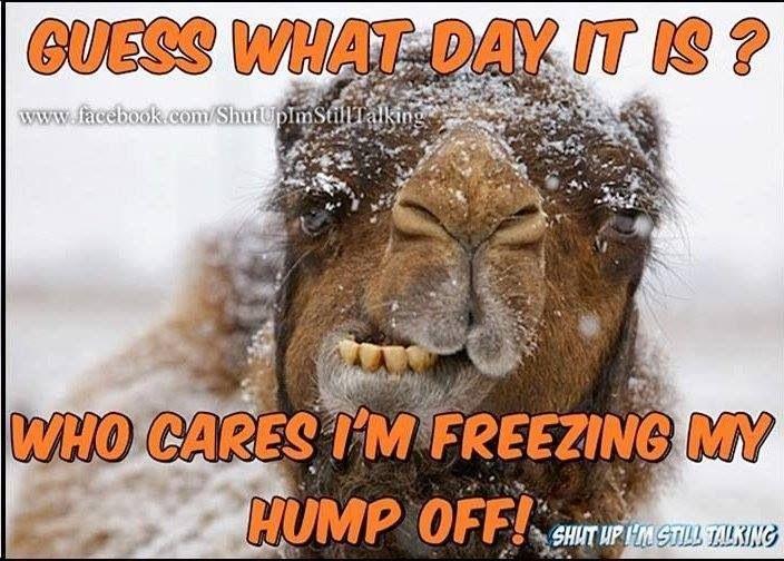 Funny Memes For Wednesday : Meme maker umm its wednesday