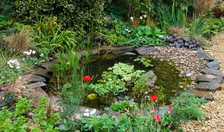 Attracting wildlife to ponds inc information on depth for Garden pond depth