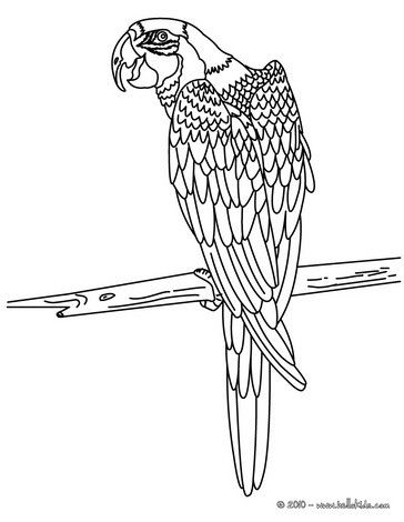 Macaw Coloring Page Nice Bird Sheet More Original Content On Hellokids