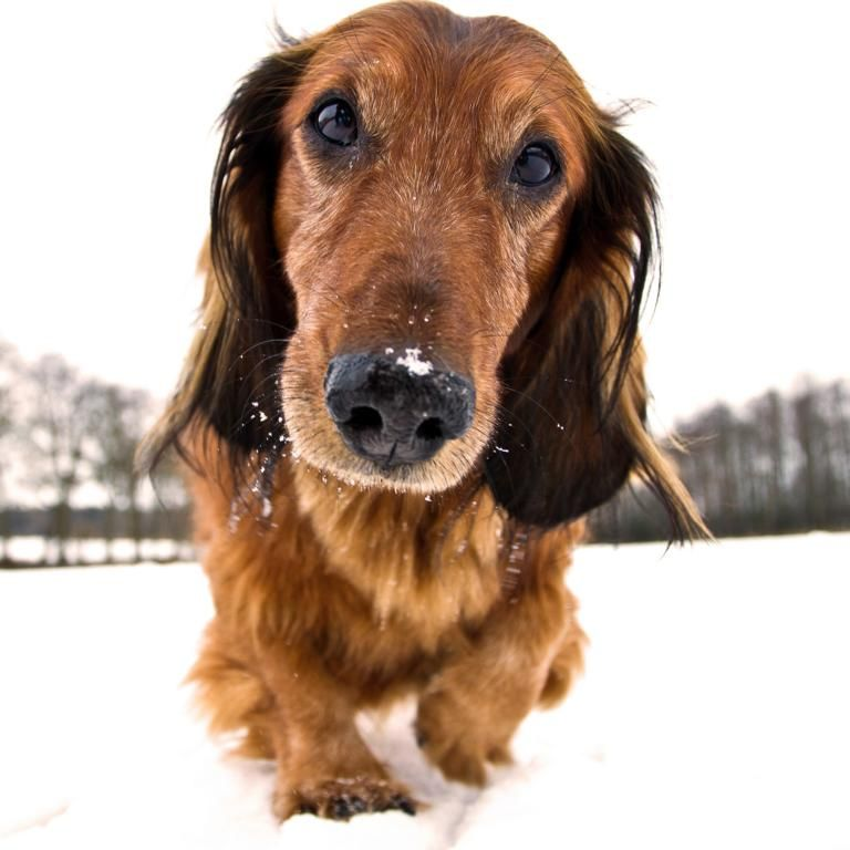 Pin On Group Dachshunds Best Dog Breed Ever