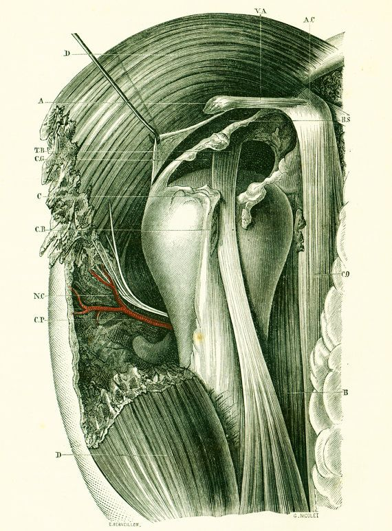 1897 Pelvis Sacral Area Rectum Human Anatomy Original Antique