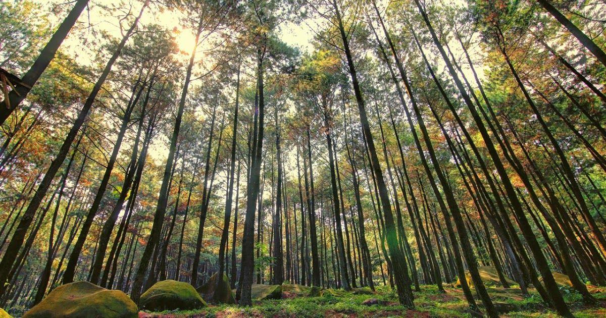 Pemandangan Indah Di Bogor 10 Tempat Wisata Alam Di Bogor Yang Wajib Dikunjungi Inilah Alasan Kenapa Puncak Bogor Selalu Me Di 2020 Pemandangan Tempat Liburan Alam