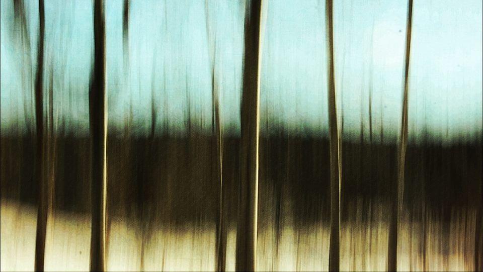 Winter tracks by Natasha Meier