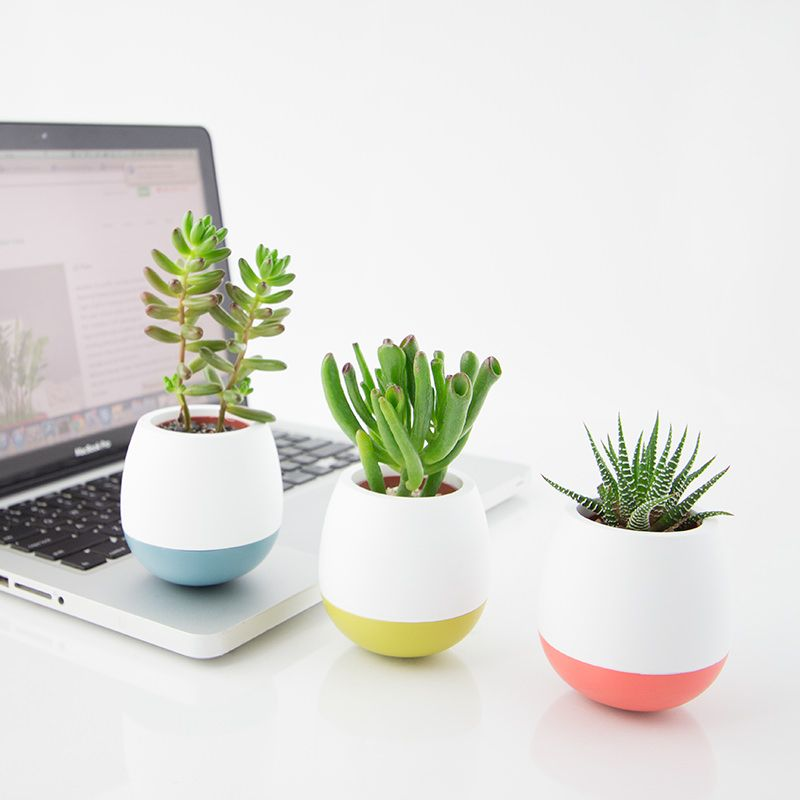 Mini Succulents   Perfect Office Plants NYC