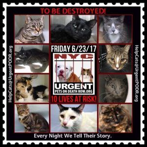 TO BE DESTROYED 6/23/17