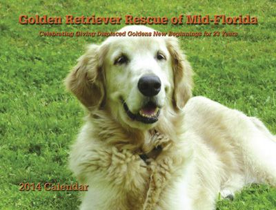 Get 12 Months Of Goldens With The Golden Retriever Rescue Of Mid