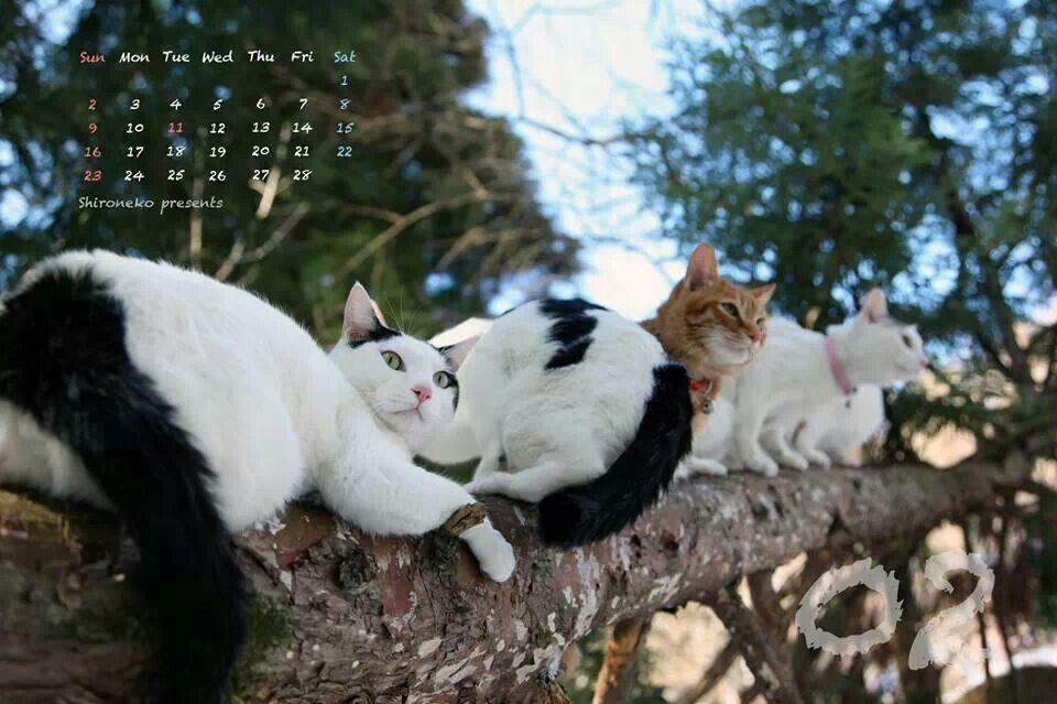 2014年2月のカレンダー