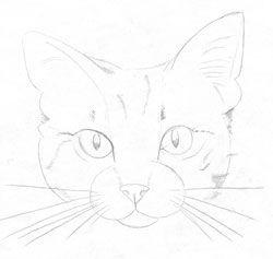 Katze Selber Zeichnen Dekoking Com 1 Katzen In 2019 Katze