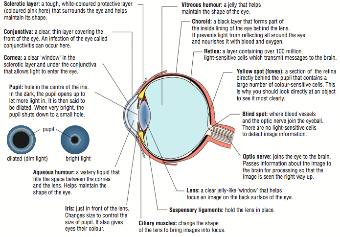 Image result for all the parts of the eye and what they do image result for all the parts of the eye and what they do ccuart Gallery