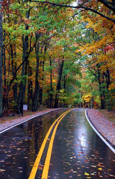 love-england:Autumn Road. (by BamaWester)