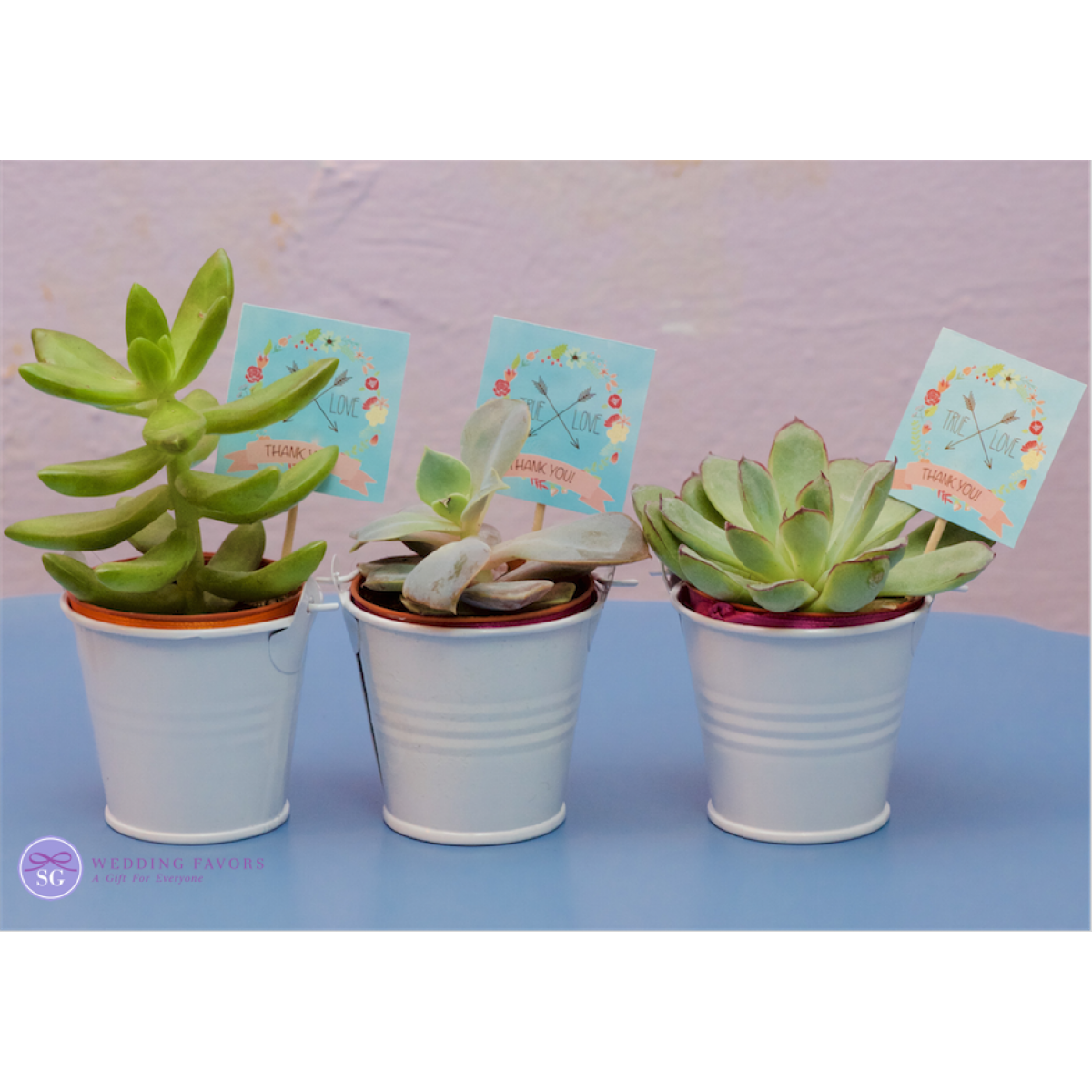 Succulents in Pails Natural gifts, Succulents