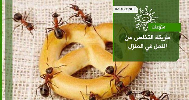 طريقة التخلص من النمل في المنزل مدونة هارتزي Fruit Banana Food