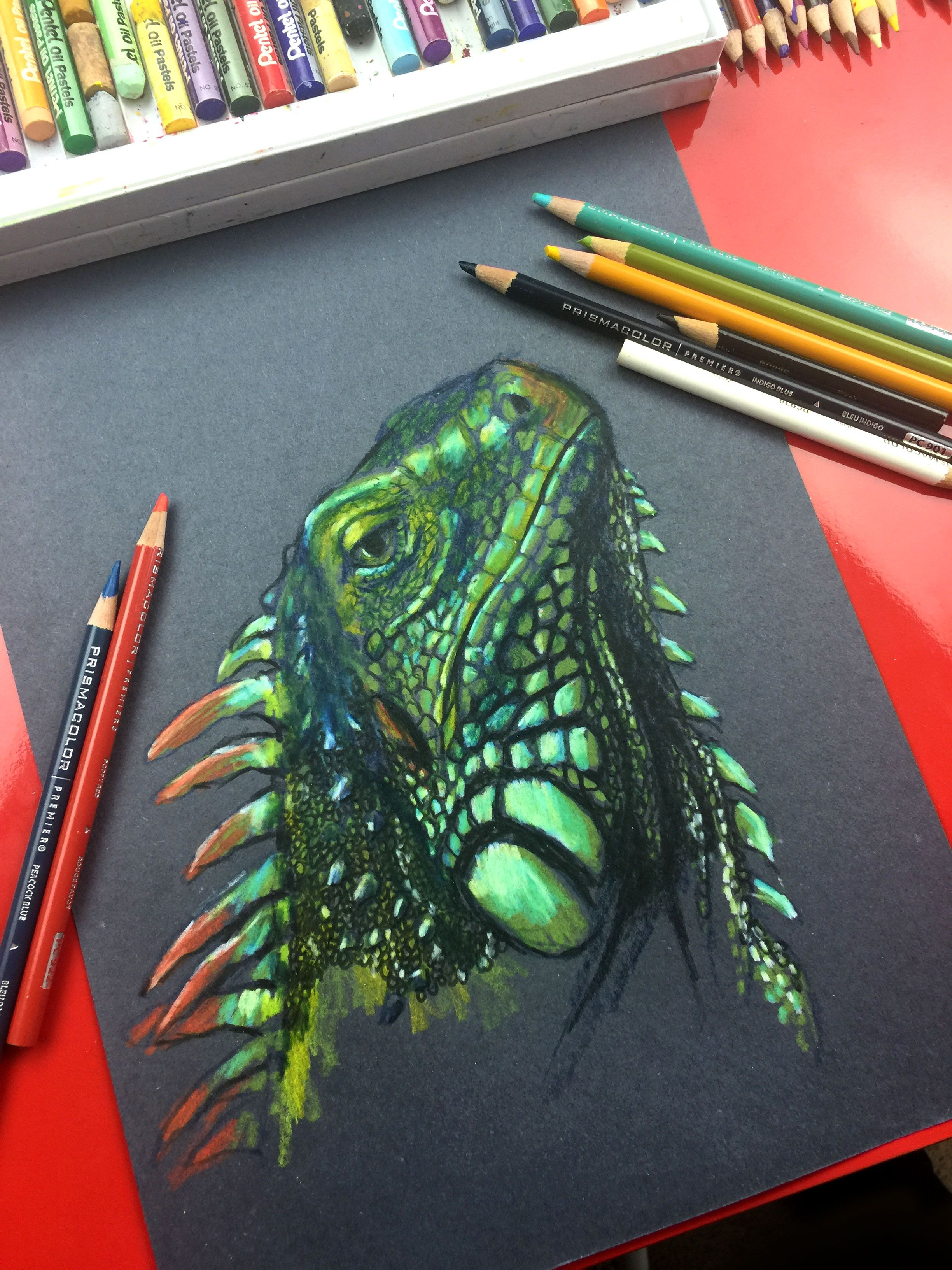 Iguana Drawing Colored Pencils On Black Paper Art For Kids Hub
