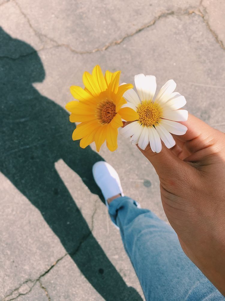 Pin By Dima On Vsco Flower Aesthetic Flowers Photography
