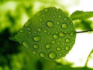 Wet Leaf Leaves Green Leaves Water Drop On Leaf
