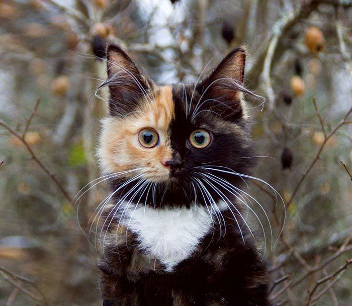 Meet Yana The Two Faced Kitty Whose Parents Ran Out Of Ink Avec Images Chat Bicolore