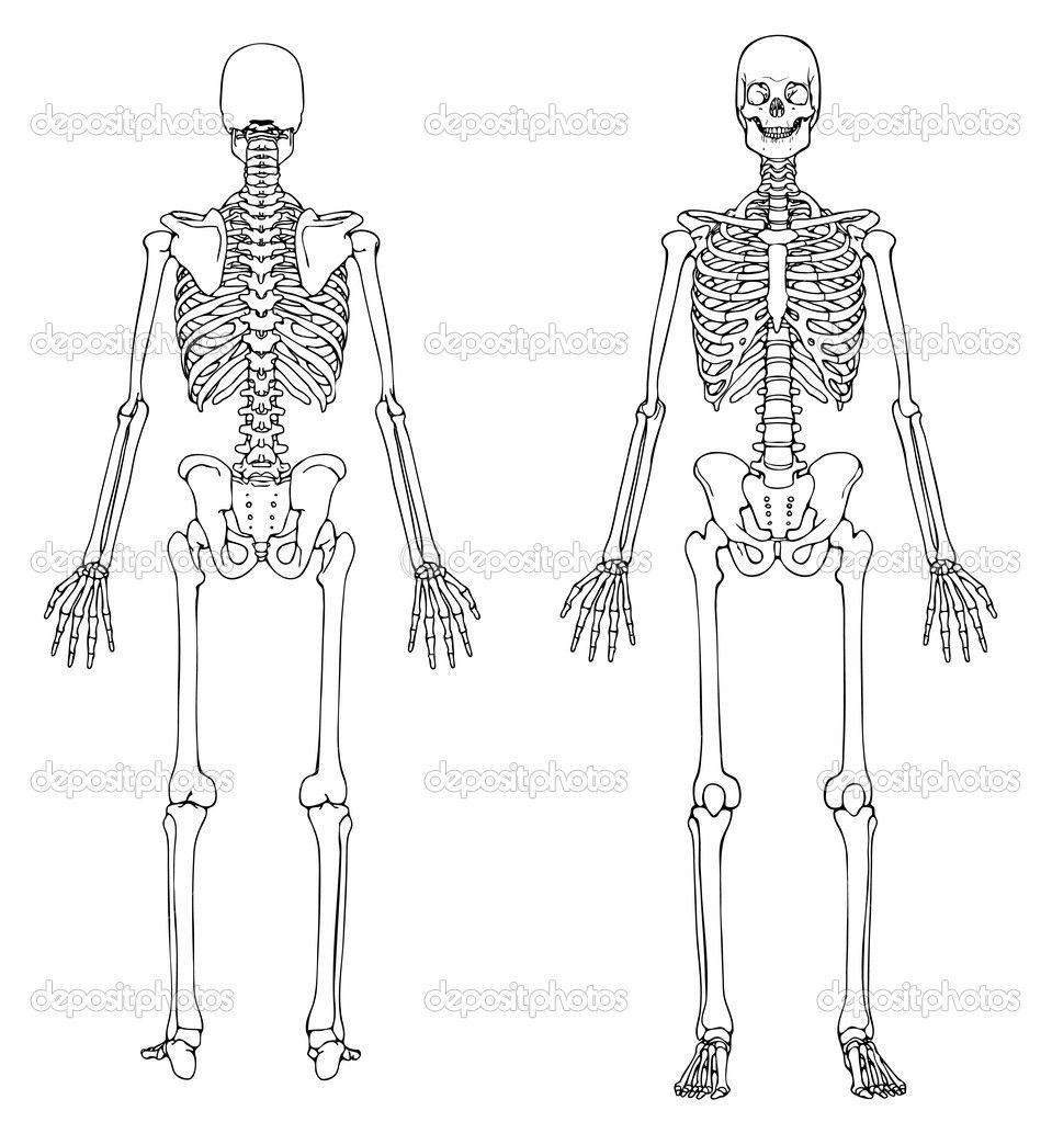 Human Skeleton Blank Diagram Tenderness Co Inside Skull in ...