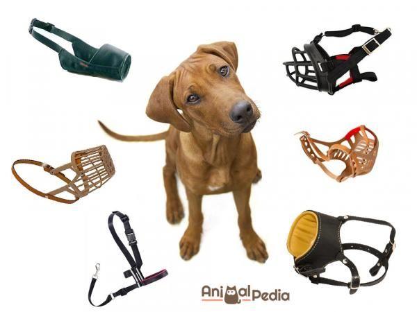 La museruola è un accessorio essenziale per i cani potenzialmente pericolosi, ma anche quando si lavora sul loro comportamento. Qui trovi tutti i tipi di museruola e come abituare il cane a portarla.