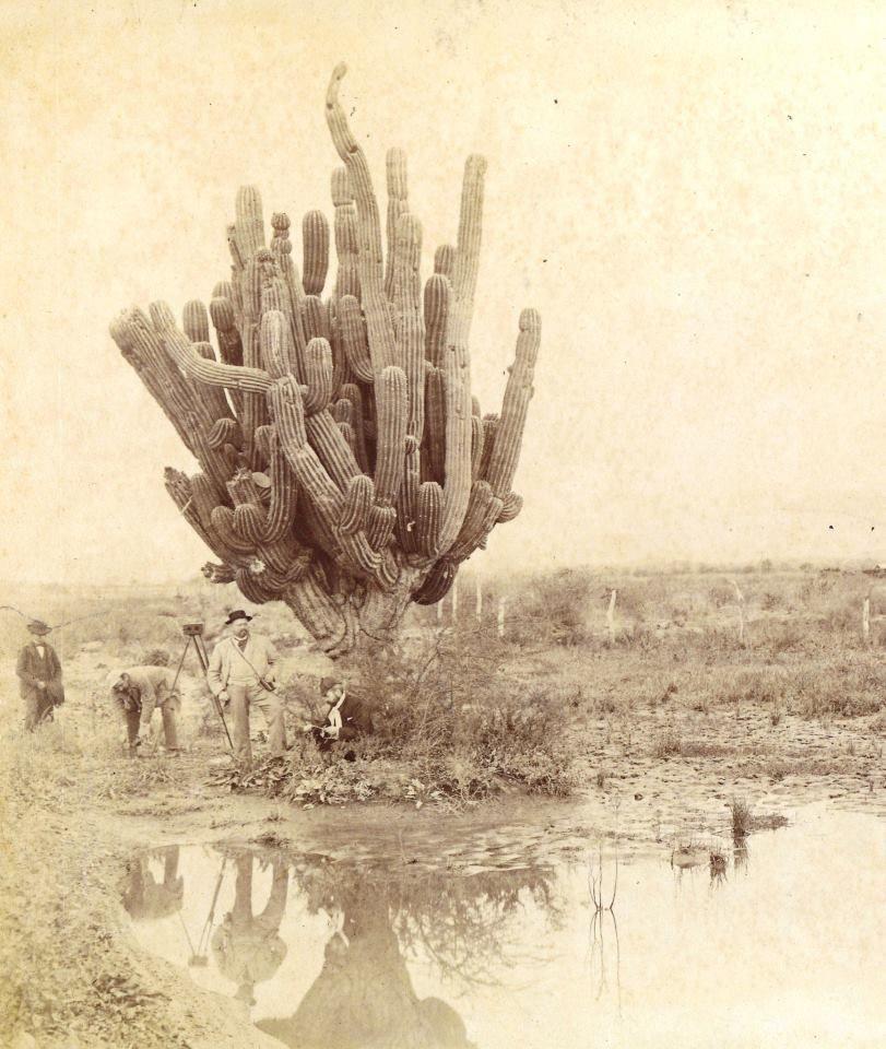 Salta. Fotografo junto a Cactus gigante en las inmediaciones de Yatasto lugar histórico