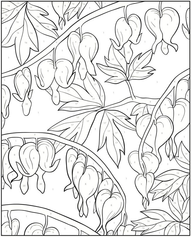 Blooming Flower Coloring Pages 28 Images