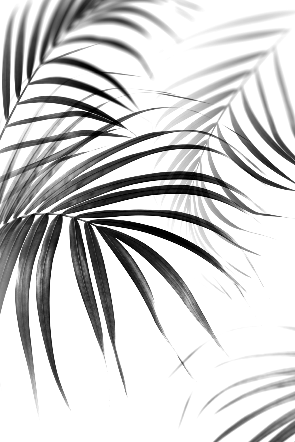 Pin By Tiarabayer On Sunset Wallpaper Black And White Photo Wall Succulents Wallpaper Black And White Art Drawing