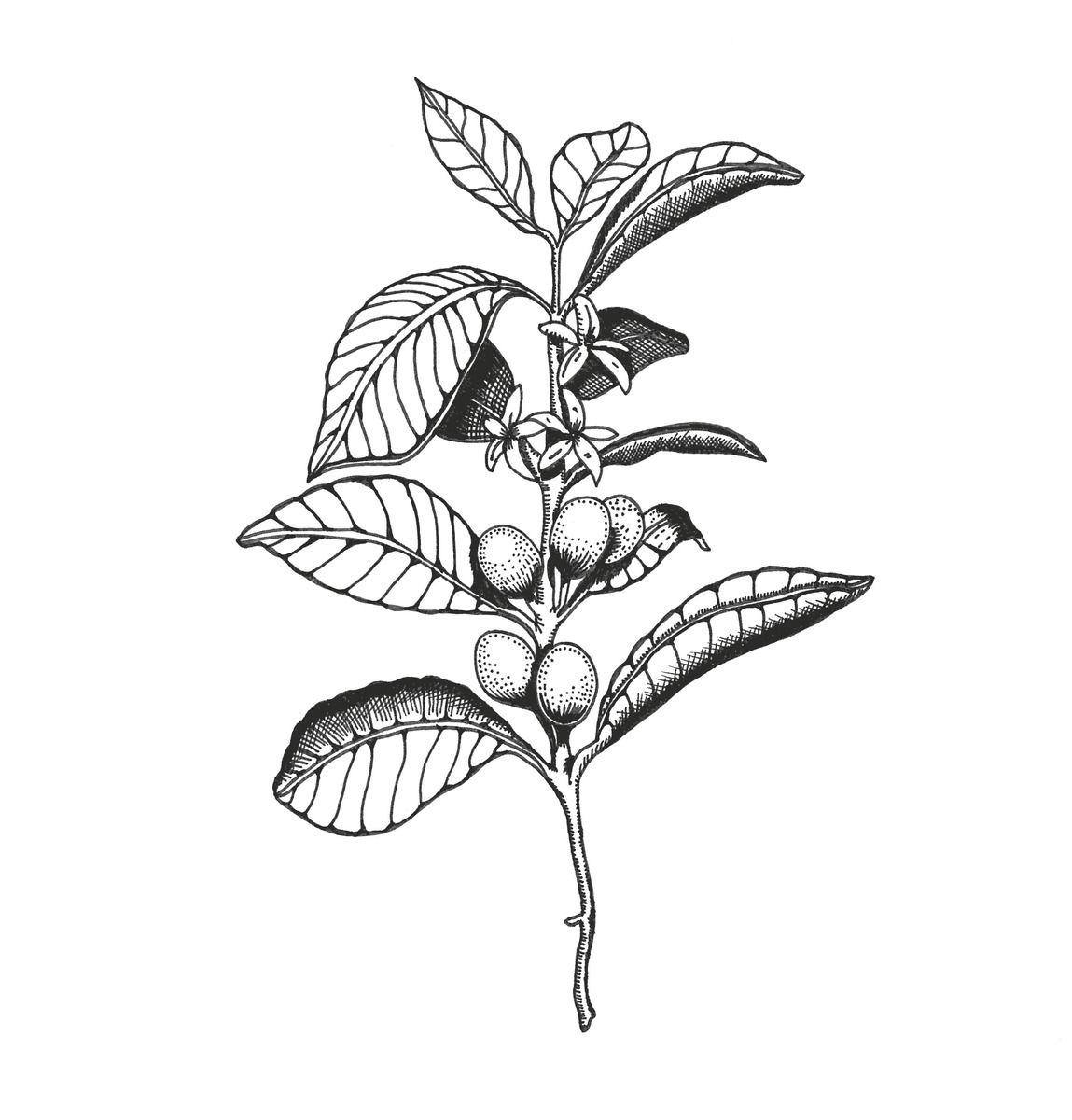Pin By Alicia Harding On Tattoos Pinterest Tattoos Plant Tattoo