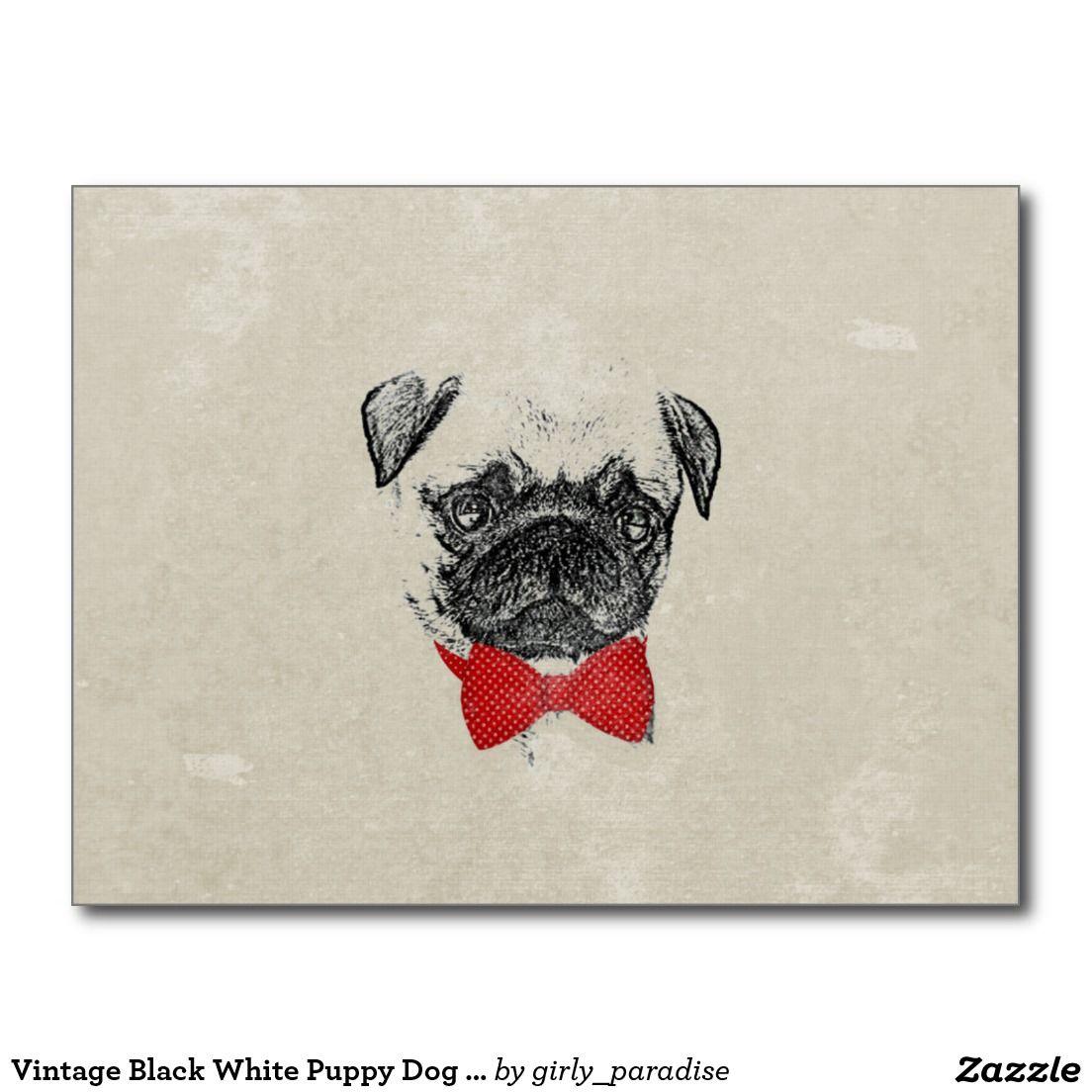 Vintage black white puppy dog pug sketch postcard vintage black