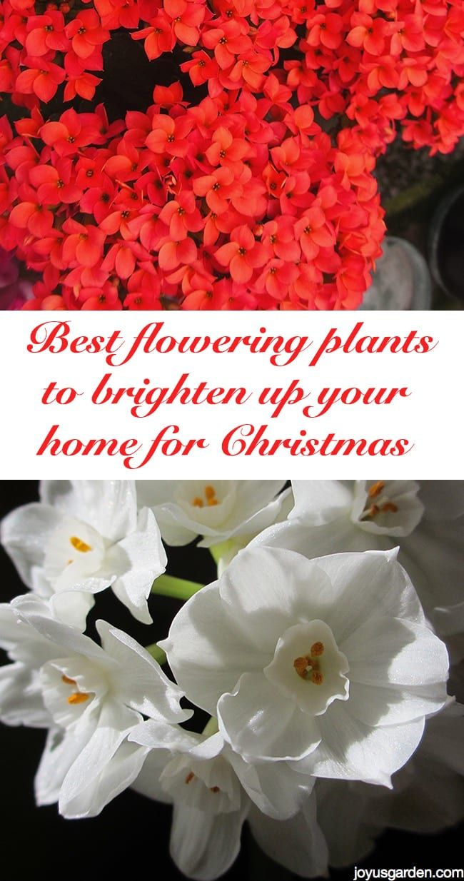 Want Some Blooms To Brighten Up Your Home For The Holidays Heres A